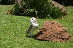猫头鹰提供 图库摄影