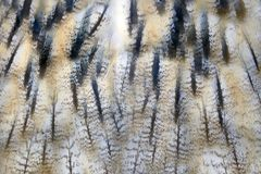 猫头鹰羽毛纹理 免版税库存图片