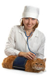 猫女性兽医丝毫 免版税图库摄影