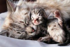 猫她的小猫 免版税图库摄影