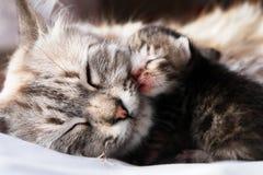 猫她的小猫 库存照片
