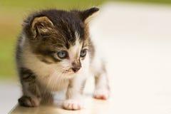 猫好奇查找照片 免版税库存照片
