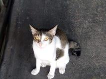 猫好奇逗人喜爱 免版税库存图片