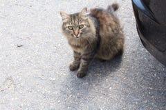 猫姿势生活 免版税库存图片