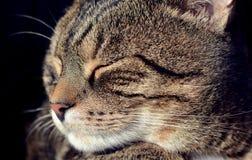 猫宏指令画象 免版税图库摄影
