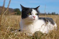 猫室外Tomcat 免版税库存照片