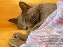 猫家庭甜点 库存照片