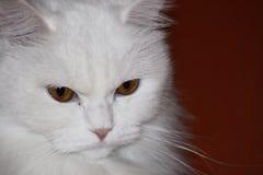 猫家庭甜白色 免版税库存照片