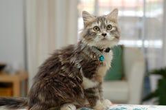 猫家 库存照片
