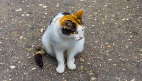 猫察觉了 免版税库存照片