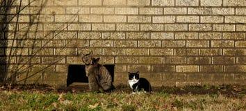 猫对墙壁 库存图片