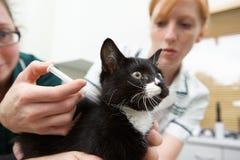 给猫射入的兽医护士 免版税库存图片
