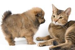 猫小狗 免版税库存图片