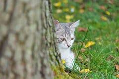 猫小猫坐卫兵在树 免版税库存图片