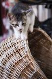 猫小猫照片山顶 免版税库存图片