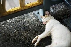 猫小猫睡觉小径路旁动物概念 免版税库存照片