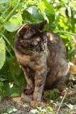 猫小猫迷路者 免版税库存图片
