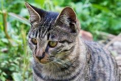 猫小猫迷路者 库存图片