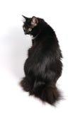 猫小的尾标 免版税库存图片