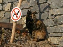 猫尾随笑话没有 免版税库存照片