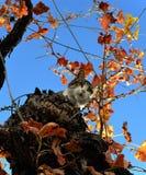 猫屋顶 免版税库存照片