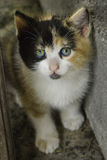 猫崽 免版税图库摄影