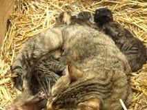 猫嵌套 免版税图库摄影