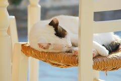 猫希腊 免版税图库摄影