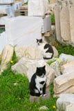 猫帕台农神庙 免版税库存图片