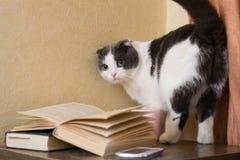 猫带着站立在nightstand的凝视近的书 免版税库存图片