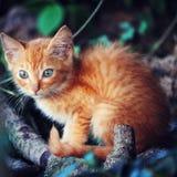 猫带红色自然 库存图片