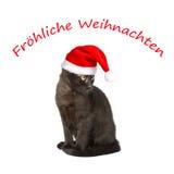 猫帽子文本圣诞快乐 库存照片