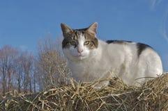 猫干草堆 库存图片