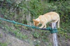 猫平衡 库存图片
