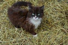 猫年轻人 库存照片