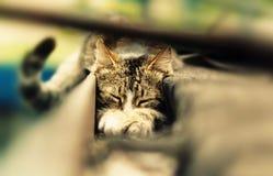 猫年轻人 免版税图库摄影