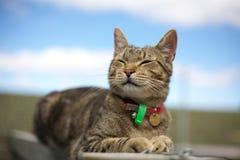 猫微笑的平纹 免版税库存图片