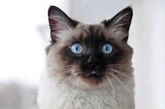 猫微笑 库存照片