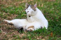 猫微笑 免版税库存图片