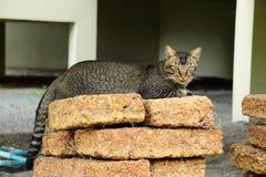 猫恋人,宠物,猫,美丽本质上 免版税库存照片