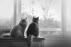 猫恋人 免版税库存照片