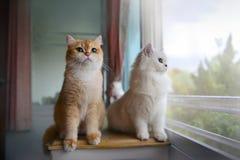 猫恋人 库存照片