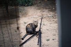 猫恶作剧 库存照片