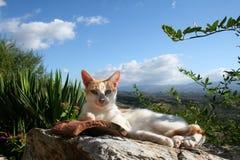 猫懒惰mystras 免版税图库摄影