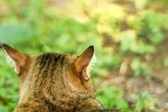 猫戏剧在庭院里 图库摄影