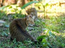 猫戏剧在庭院里 免版税库存图片