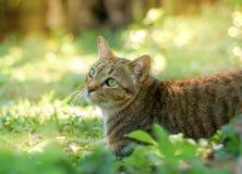 猫戏剧在庭院里 免版税库存照片