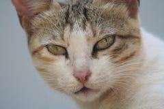 猫房子 库存照片