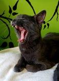 猫打呵欠的嘴 免版税库存照片