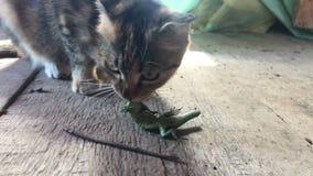 猫抓住蜥蜴 影视素材